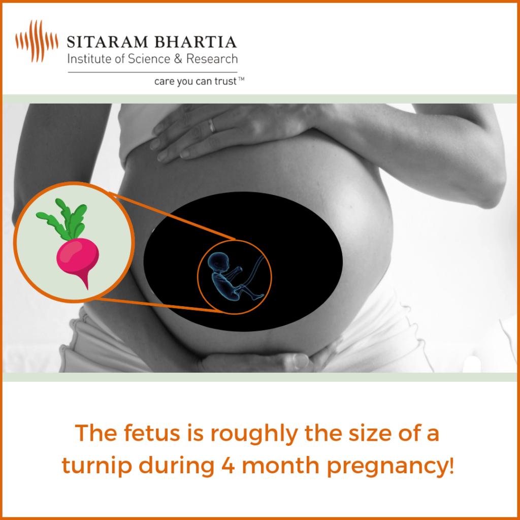 4 months pregnant fetus