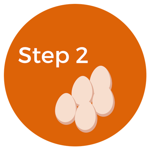step 2 retrieving eggs for ivf